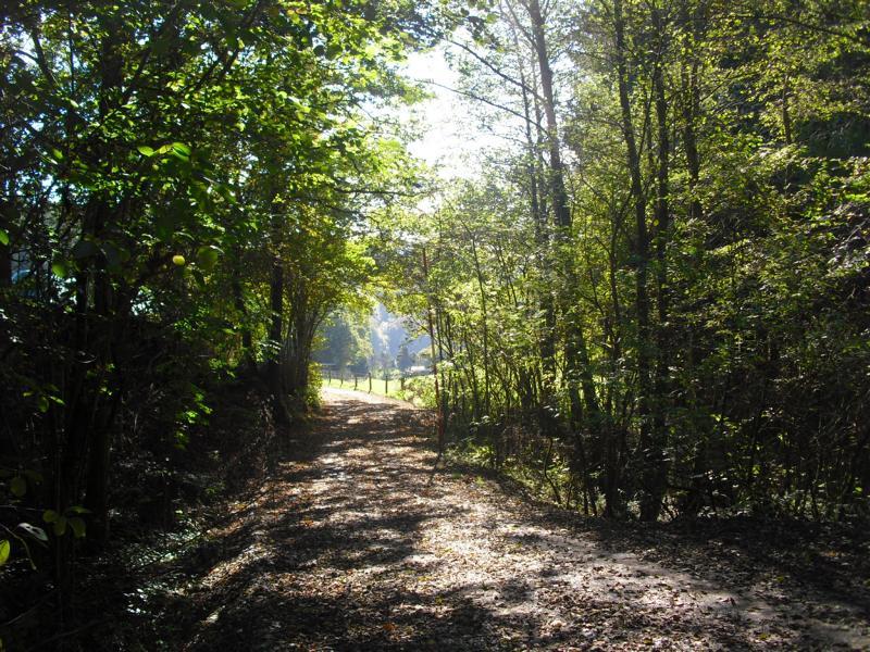 Unser Hauberg - so schön sind unsere Wälder